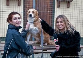 Animal Welfare Store Limerick 2011 (60)