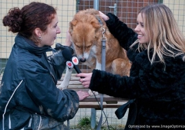 Animal Welfare Store Limerick 2011 (61)