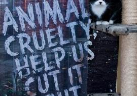 Animal Welfare Store Limerick 2011 (68)