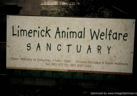 Animal Welfare Store Limerick 2011 (77)