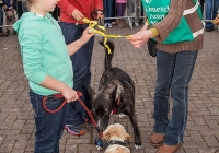 riverfest-dog-show-i-love-limerick-03