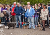 riverfest-dog-show-i-love-limerick-04