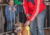 riverfest-dog-show-i-love-limerick-07