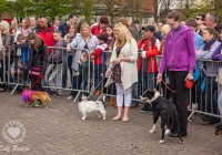 riverfest-dog-show-i-love-limerick-10