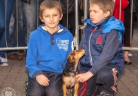 riverfest-dog-show-i-love-limerick-11