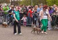 riverfest-dog-show-i-love-limerick-16