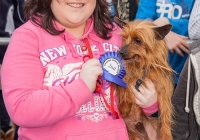riverfest-dog-show-i-love-limerick-20