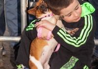 riverfest-dog-show-i-love-limerick-22