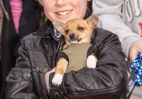 riverfest-dog-show-i-love-limerick-24