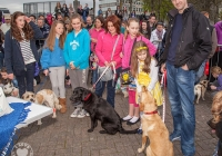 riverfest-dog-show-i-love-limerick-26