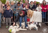 riverfest-dog-show-i-love-limerick-27