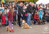 riverfest-dog-show-i-love-limerick-28