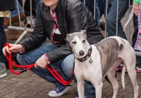 riverfest-dog-show-i-love-limerick-30