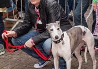 riverfest-dog-show-i-love-limerick-30