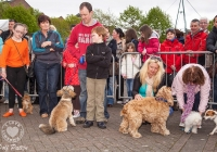 riverfest-dog-show-i-love-limerick-31