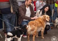 riverfest-dog-show-i-love-limerick-34