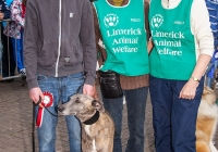 riverfest-dog-show-i-love-limerick-36