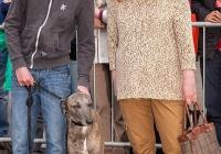 riverfest-dog-show-i-love-limerick-43
