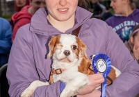 riverfest-dog-show-i-love-limerick-45