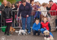 riverfest-dog-show-i-love-limerick-47