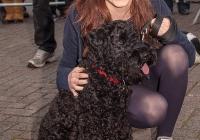 riverfest-dog-show-i-love-limerick-48