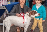 riverfest-dog-show-i-love-limerick-51