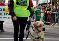 st-patricks-day-limerick-2012-126