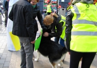 volunteer-happiness-day-i-love-limerick-009