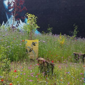 Limerick Wildlife - Creating space for nature
