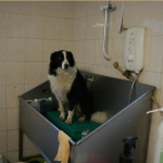 Crocodile Dundee's Dog Grooming Parlour & School