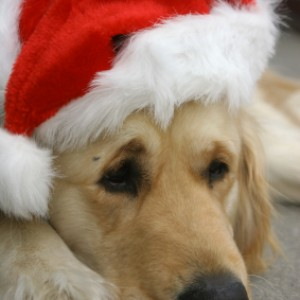 Santa Paws Appeal 2015