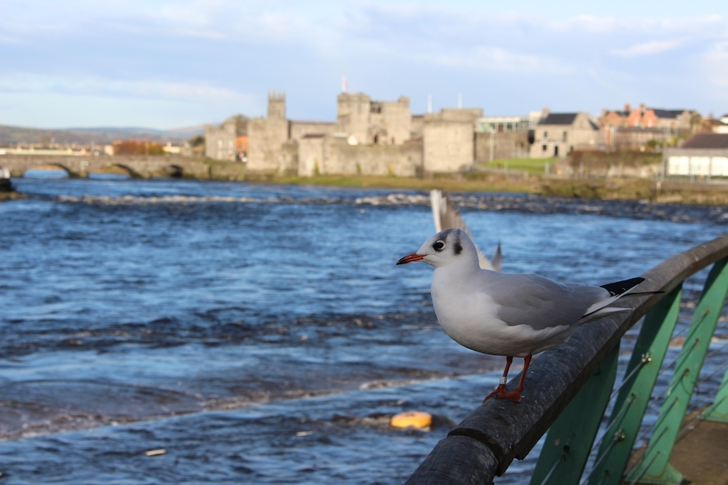 Limerick named European city of the Future