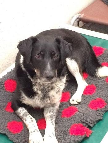 Limerick Animal Welfare need your help