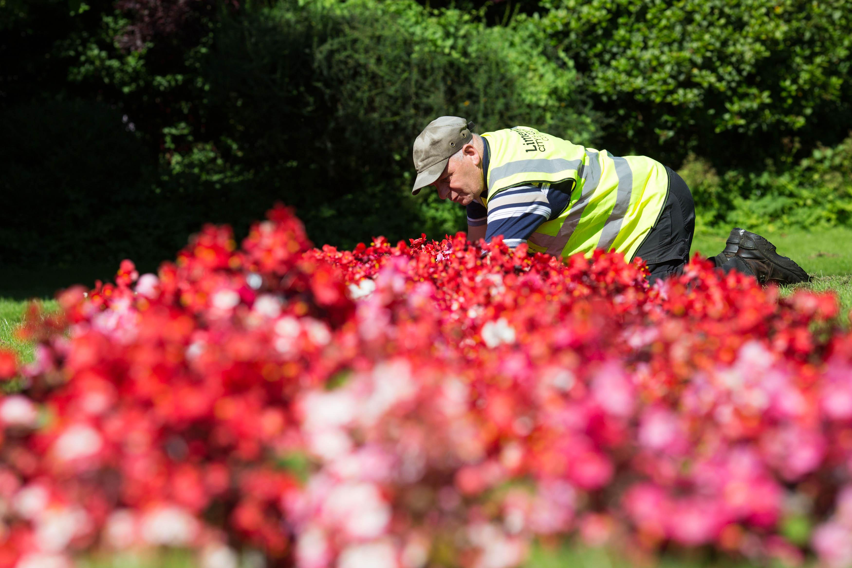 Parks Department Vibrant flowers brighten Limerick city centre