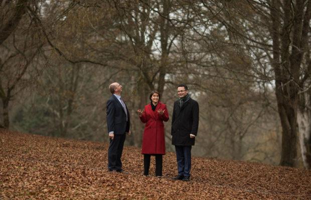 550k euro Tree Investment