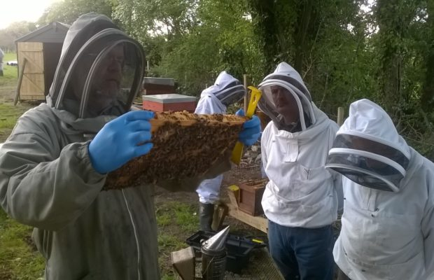 Limerick Beekeepers Association Annual Beginner Course 2018