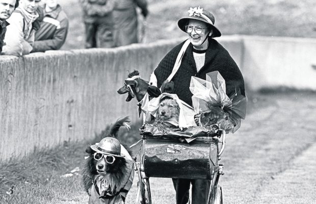 Dodo Reddan and her pram of dogs