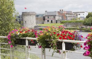 Limerick floral displays