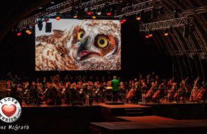 National Geographic Symphony Limerick