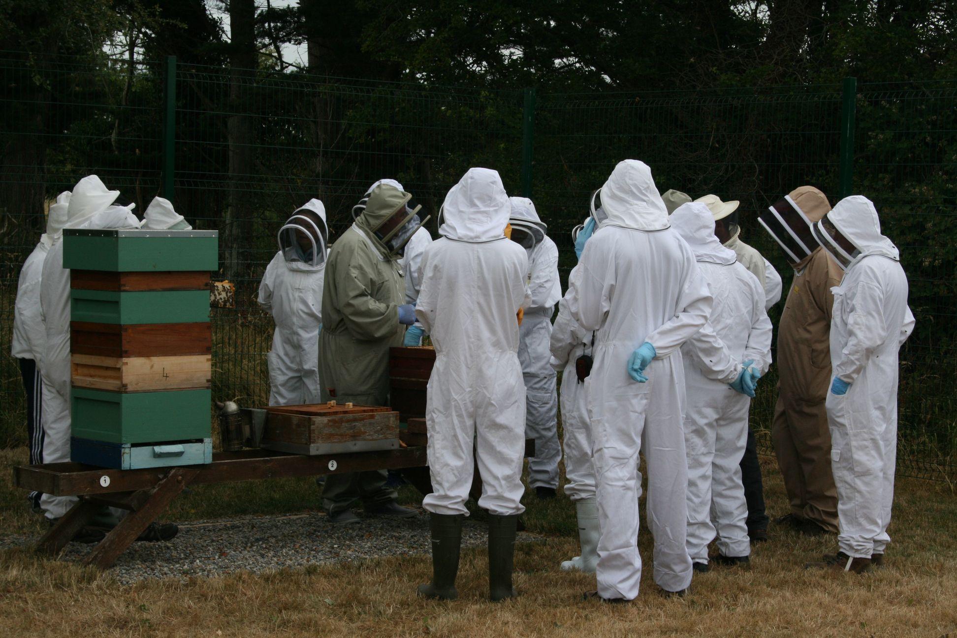 Limerick Beekeepers Association
