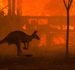 Ivory Closet Australian Bushfires