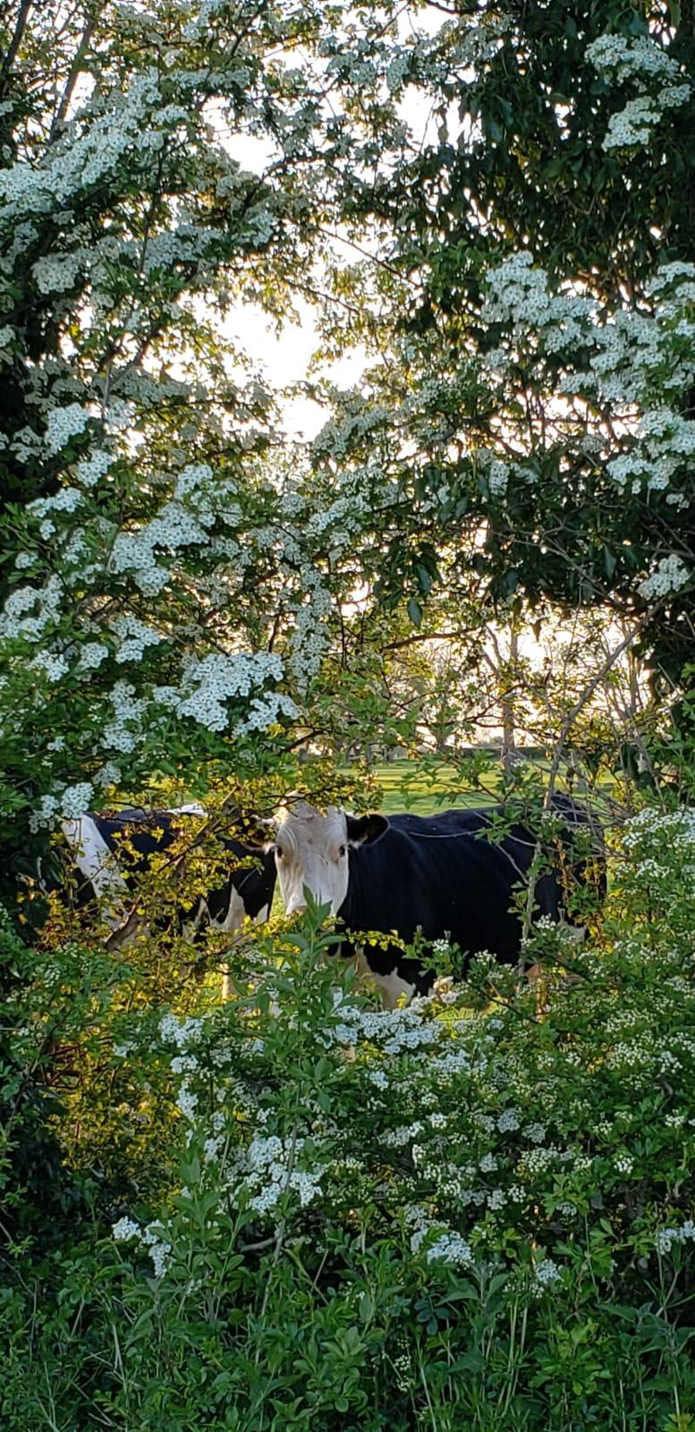 Adare vegan farm