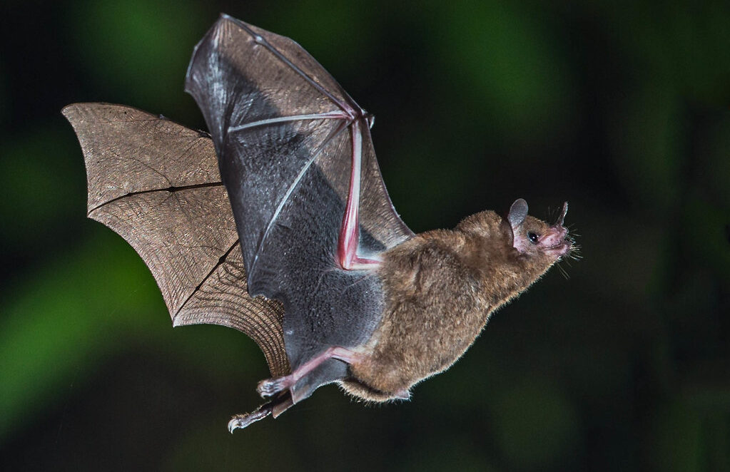 Warm weather brings out the bats