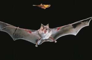 Virtual Bat Walk
