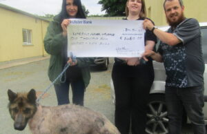 Barkingmad.ie