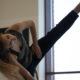 Dance Limerick virtualclasses