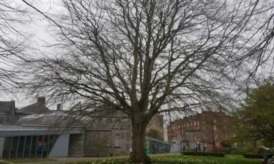 National Tree Week 2021 - Copper Beech in Peoples Park pictured above