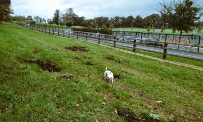 Mungret Dog Park