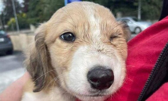 Limerick Animal Welfare puppy Denis has been rescued after raising over €2,880 online for the puppy's treatment.