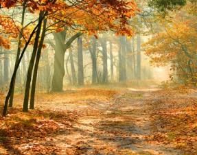 An Autumn Nature Story by Albert Nolan